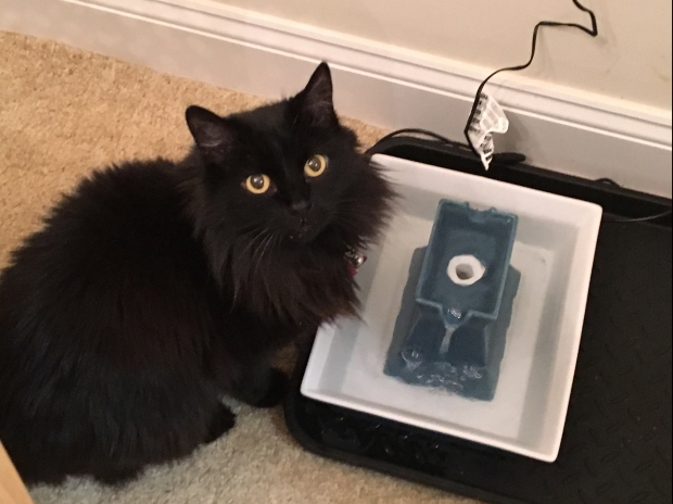 My Cat Keeps Knocking Over The Water Bowl