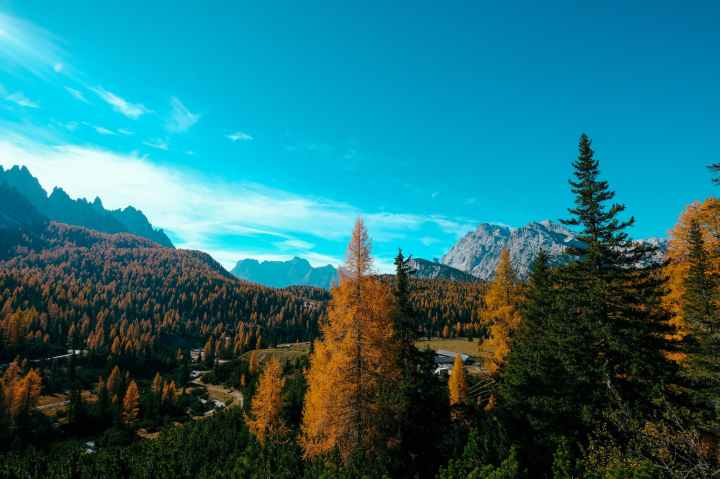 orange and green pine trees